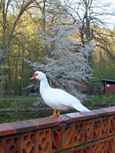 Stražisko na jaře